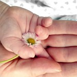 baby-mother-hands-holding-daisy